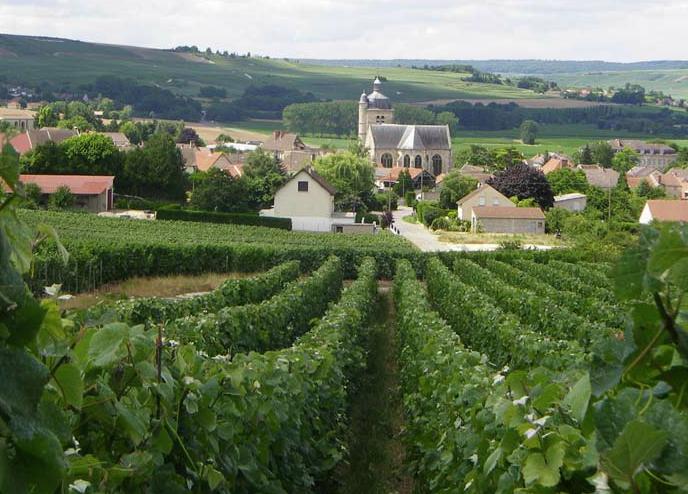 Champagne Hervé Mathelin Producteur Marne