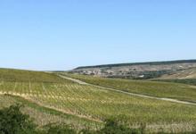 Champagne Florence Duchêne