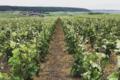 Champagne Collard-Leveau