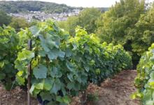 Champagne Burlot-Nahé