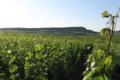 Champagne Patrick Regnault