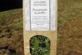 Artemisia infusions. Promenade au jardin