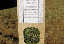 Artemisia infusions. Présence et persévérence