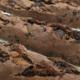 La Forneria. Baguette chocolat