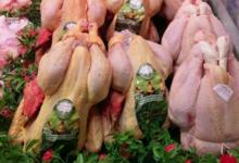 Mon poulet. Les jardins de Mauvert
