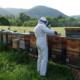 Le rucher de Bastien