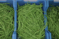 Ferme Bel-Air. Haricots verts