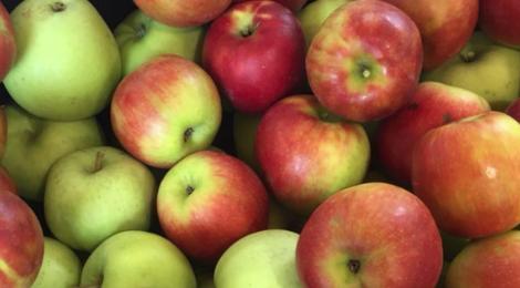 Les Vergers de Gailladé. Pommes
