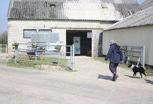 La jumenterie des Crinières Blanches Kenerdu 56110 Roudouallec
