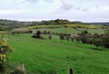Domaine CAMUS RENAUT (SCEA les Coteaux de Coiffy)