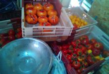 Les jardins de la Marette. Tomate
