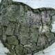 Minérasève