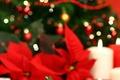 Un Noël réussi passe par la décoration !