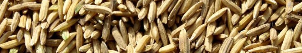 Mélange de riz
