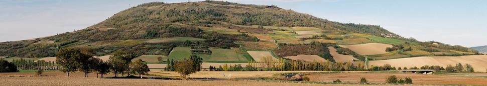 Vin blanc d'Auvergne
