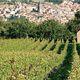 Vin d'Auvergne rouge